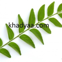curry-leaves copy